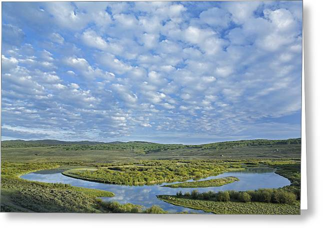 The Green River  Bridger-teton National Greeting Card by Tim Fitzharris
