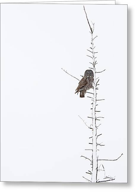 The Grey Hunter On White Greeting Card