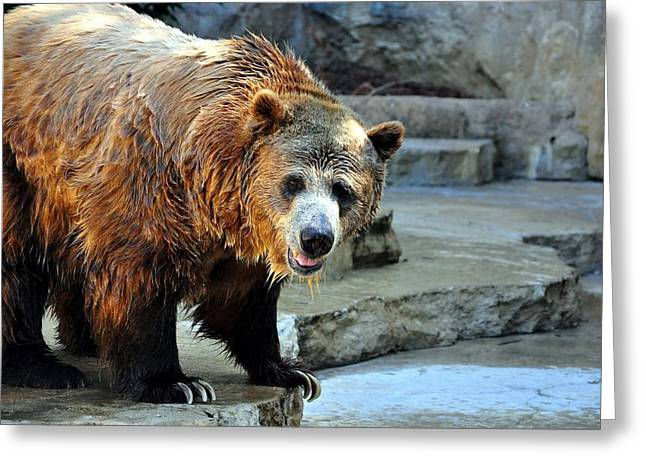 The Grizzly Bear Greeting Card by Cherie Haines