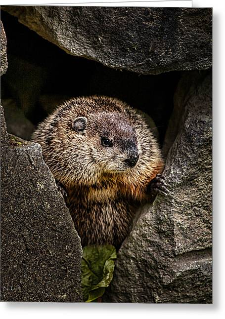 The Groundhog Greeting Card by Bob Orsillo