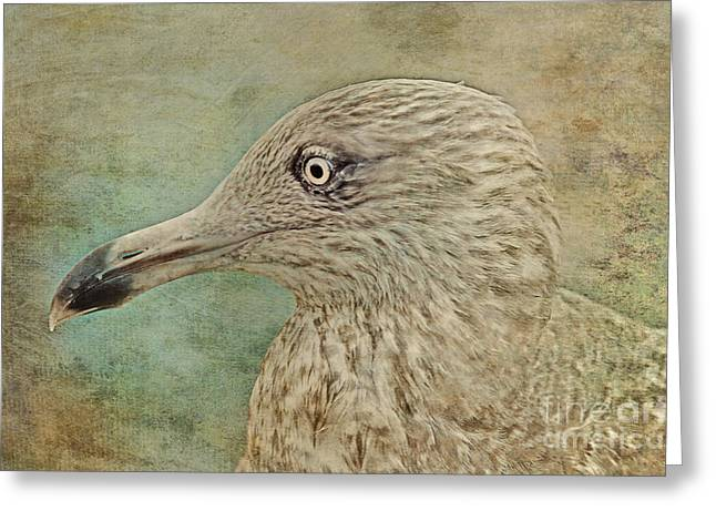 The Gull Greeting Card by Lyndsey Warren