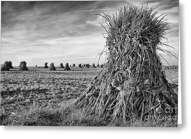 Amish Harvest Greeting Card