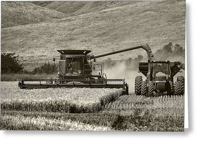 The Harvest Greeting Card by Gary Neiss