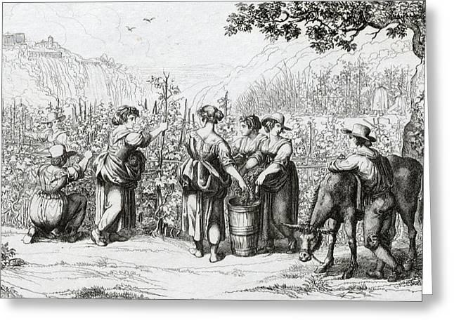 The Harvest In Tivoli, La Vendemmia In Tivoli Greeting Card by Italian School