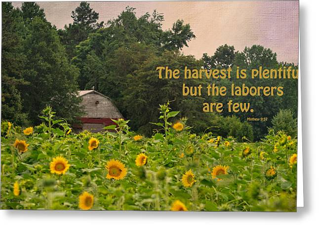 The Harvest Is Plentiful Greeting Card by Sandi OReilly