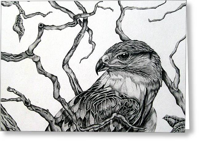 Greeting Card featuring the drawing The Hawk by Alison Caltrider