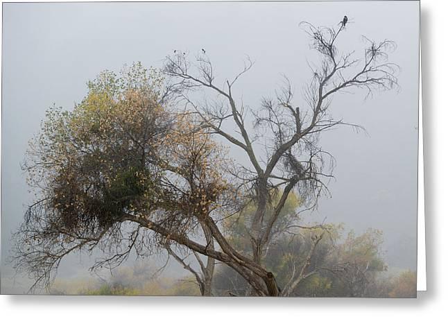 The Hawk Greeting Card by Darin McQuoid
