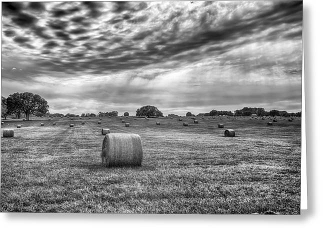 The Hay Bails Greeting Card by Howard Salmon