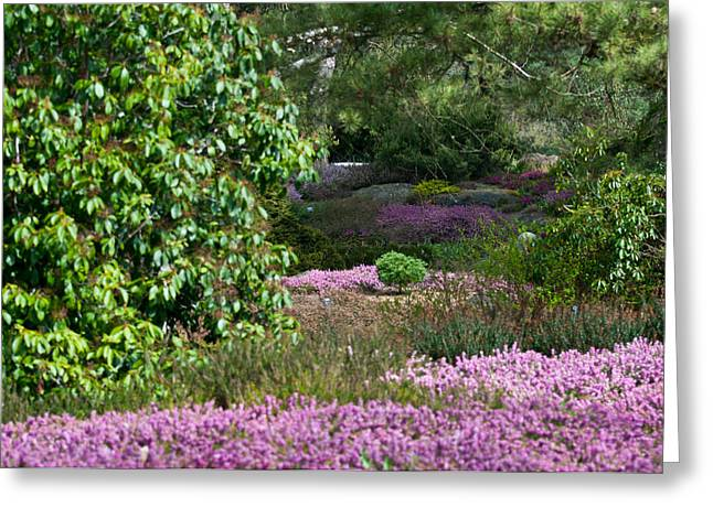 Greeting Card featuring the photograph The Heather Path by Sabine Edrissi