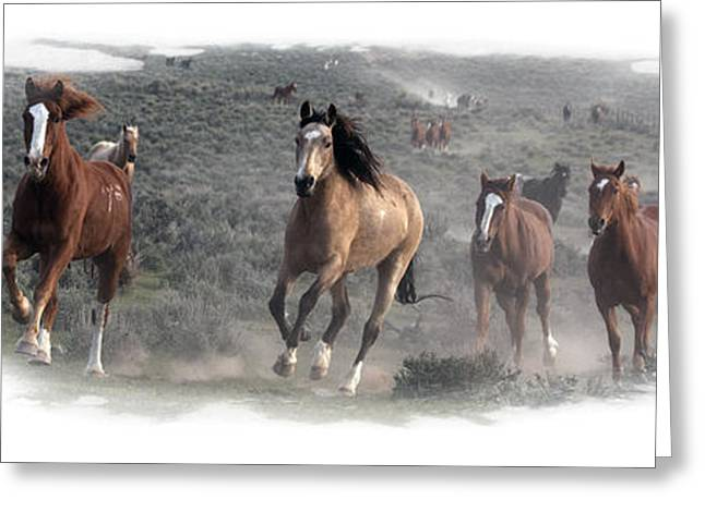 The Herd Is Coming Greeting Card by Judy Deist