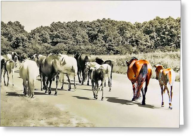 The Herd Greeting Card by JAMART Photography