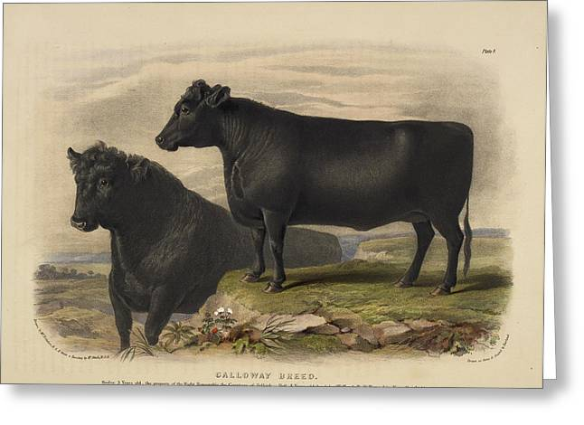 The Hereford Breed Greeting Card by British Library