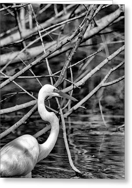 The Hidden Egret  Greeting Card by Joshua House