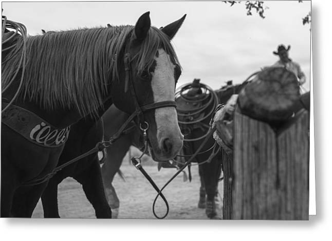 Greeting Card featuring the photograph The Hitching Post by Amber Kresge