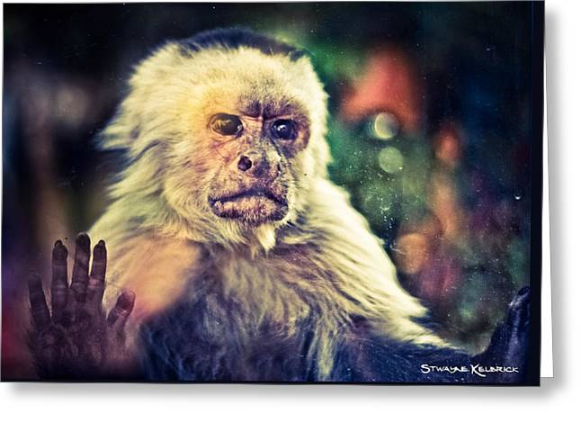 Greeting Card featuring the photograph The Hopeless Ape by Stwayne Keubrick