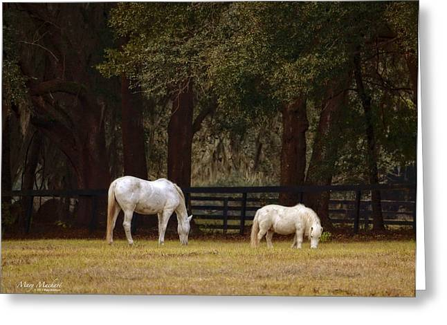 The Horse And The Pony - Standard Size Greeting Card by Mary Machare