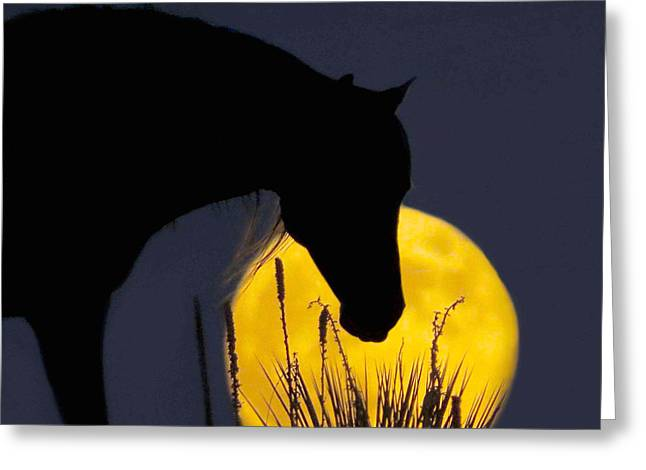The Horse In The Moon Greeting Card