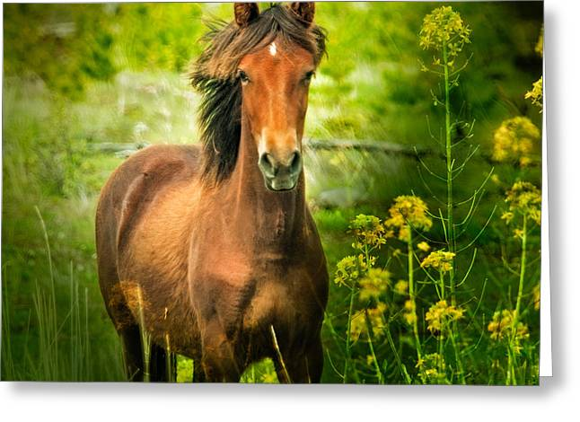 The Horse In The Wildflowers Greeting Card