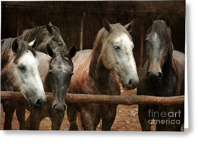 The Horses Greeting Card by Angel  Tarantella