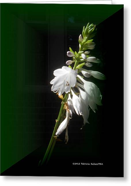 The Hosta Flowers Greeting Card by Patricia Keller