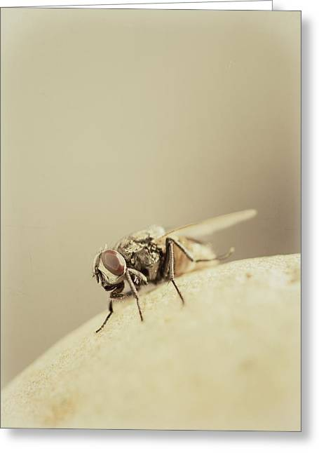 The Housefly II Greeting Card by Marco Oliveira