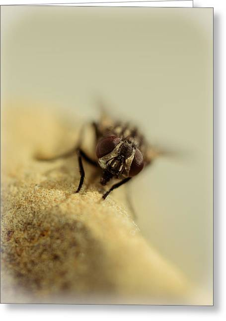 The Housefly Iv Greeting Card by Marco Oliveira