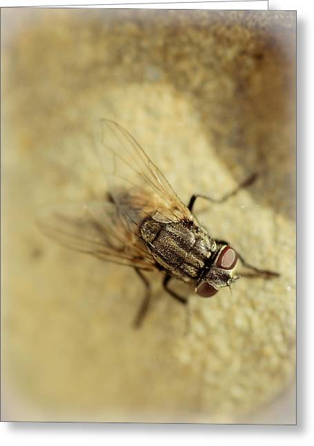 The Housefly Vi Greeting Card by Marco Oliveira