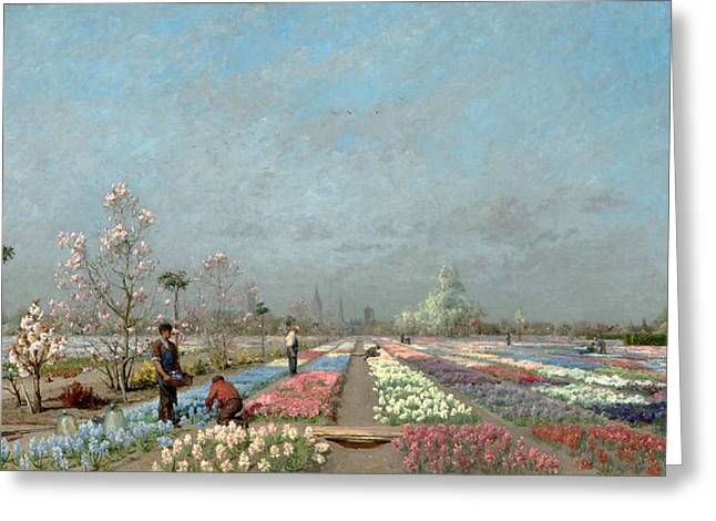 The Hyacinth Fields In Bloom At The Van Greeting Card by Adrien Louis Demont