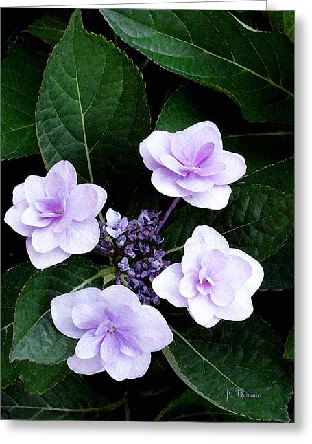 The Hydrangea / Flowers Greeting Card
