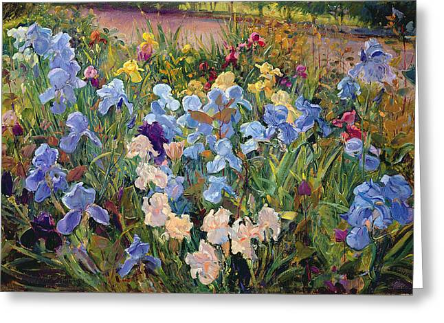 The Iris Bed Greeting Card by Timothy Easton