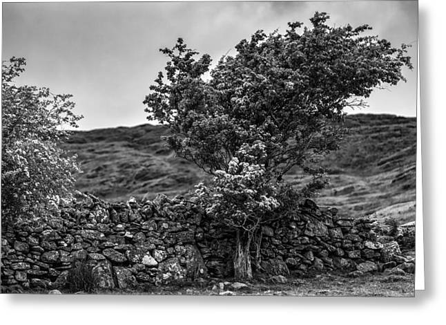 Greeting Card featuring the photograph The Irish Wall And The Tree by Juergen Klust