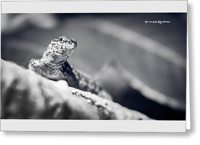 Greeting Card featuring the photograph The Iron Lizard II by Stwayne Keubrick
