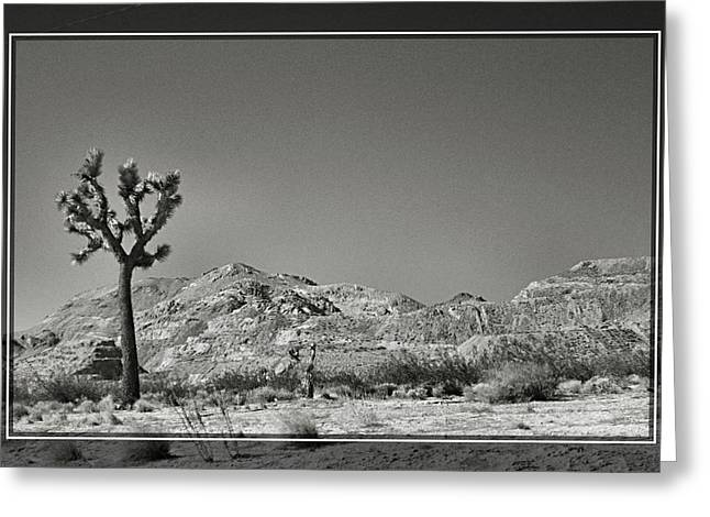 The Joshua Tree Greeting Card by Cindy Nunn