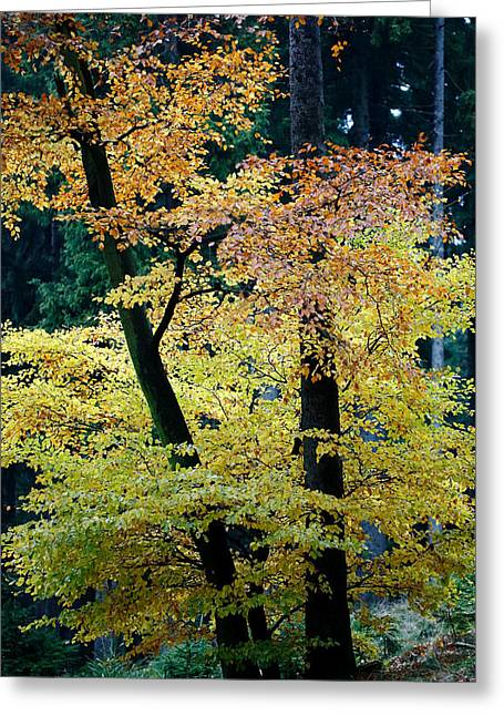The Joy Of Being In Autumn Greeting Card by Mah FineArt