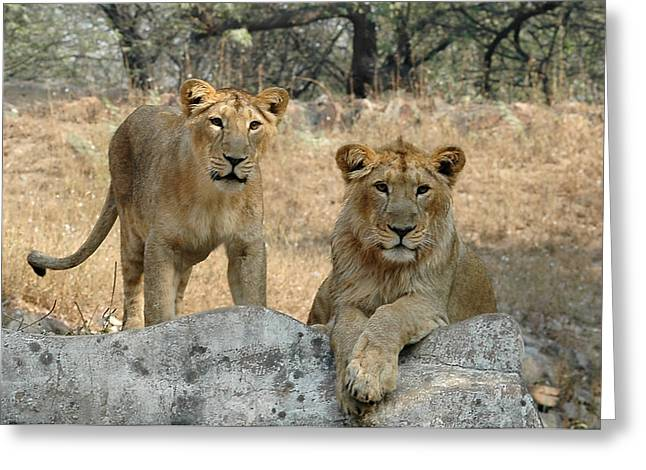 The King And The Queen Greeting Card by Barun Sinha
