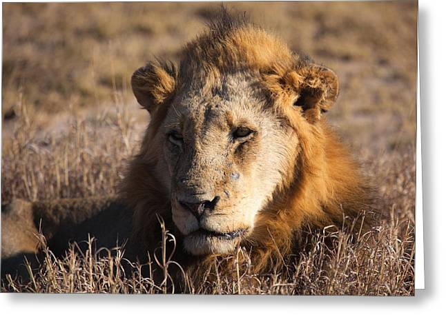 The King Greeting Card by Craig Brown