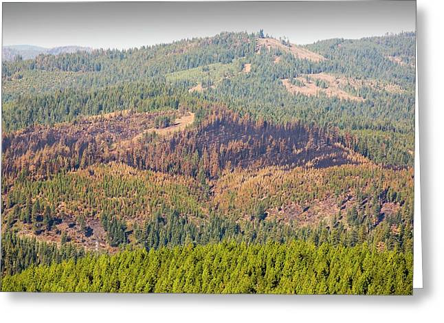 The King Fire Greeting Card by Ashley Cooper