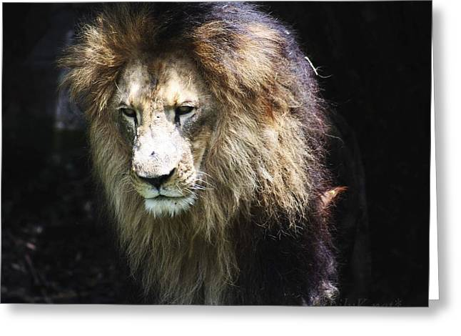 The King In The Shadows Greeting Card