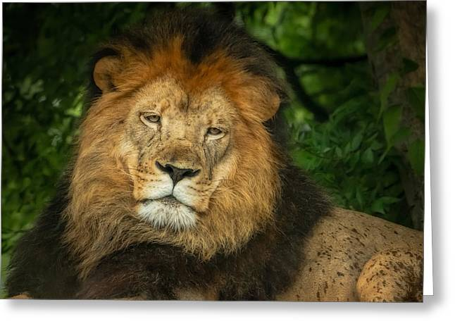 The King Rests Greeting Card by Linda Karlin