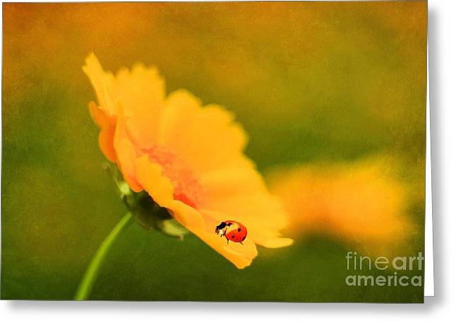 The Lady Bug Greeting Card by Darren Fisher