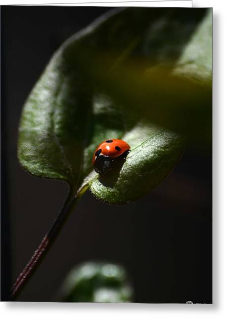 The Lady Bug Greeting Card by Phillip Segura