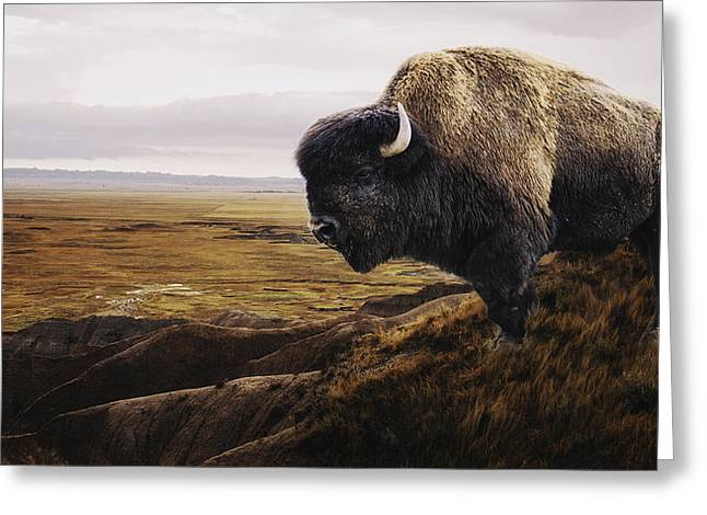 The Last Buffalo Greeting Card by Ron  McGinnis