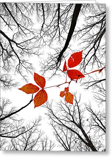 The Last Leaves Of November Greeting Card