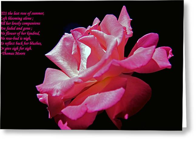 The Last Rose Of Summer Greeting Card