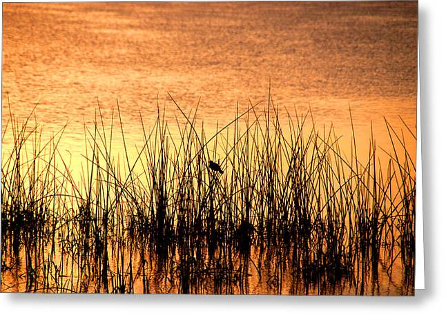 The Last Song Of The Day Greeting Card by Susanne Van Hulst