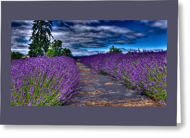 The Lavender Field Greeting Card