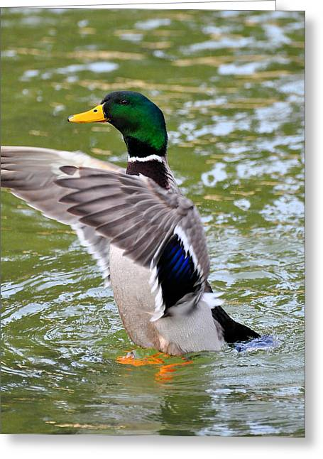 The Leader Greeting Card by Todd Hostetter
