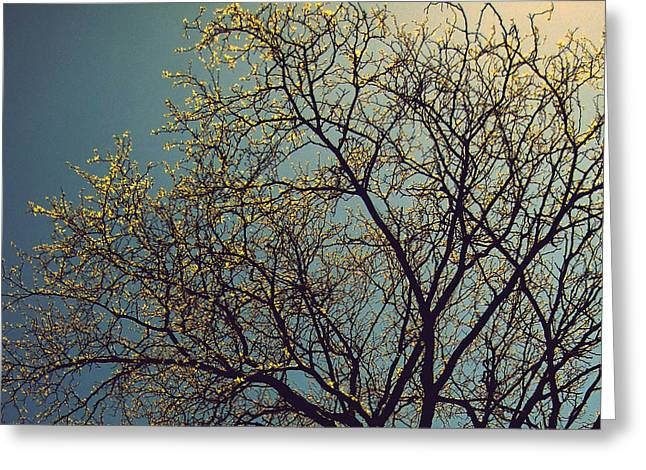 The Leaves Are Returning Greeting Card by Jhoy E Meade