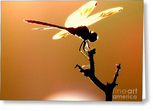 The Light Of Flight Upon The Mosquito Hawk At The Mississippi River In New Orleans Louisiana Greeting Card by Michael Hoard