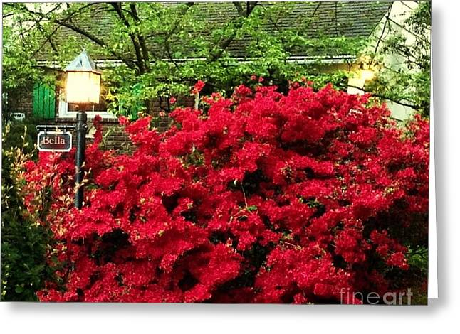 Greeting Card featuring the photograph The Light Red Bush Bella by Becky Lupe